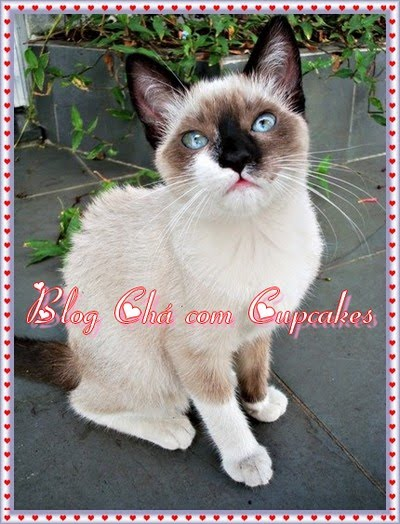 brasil fodendo gatinhas gratis