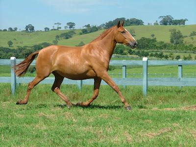 Arco-íris Cavalo Riding Esporas peso leve