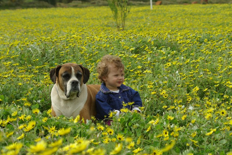 Die kinders en veld blomme / all the kids and wildflowers