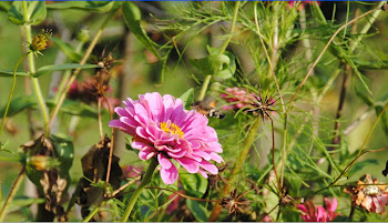 Non sembra un colibrì ?