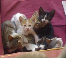 احنا 5 قطط