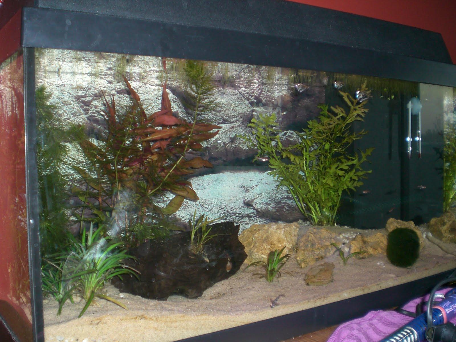 Bouw aquarium achterwand  Aquarium gekocht en zelf achterwand maken