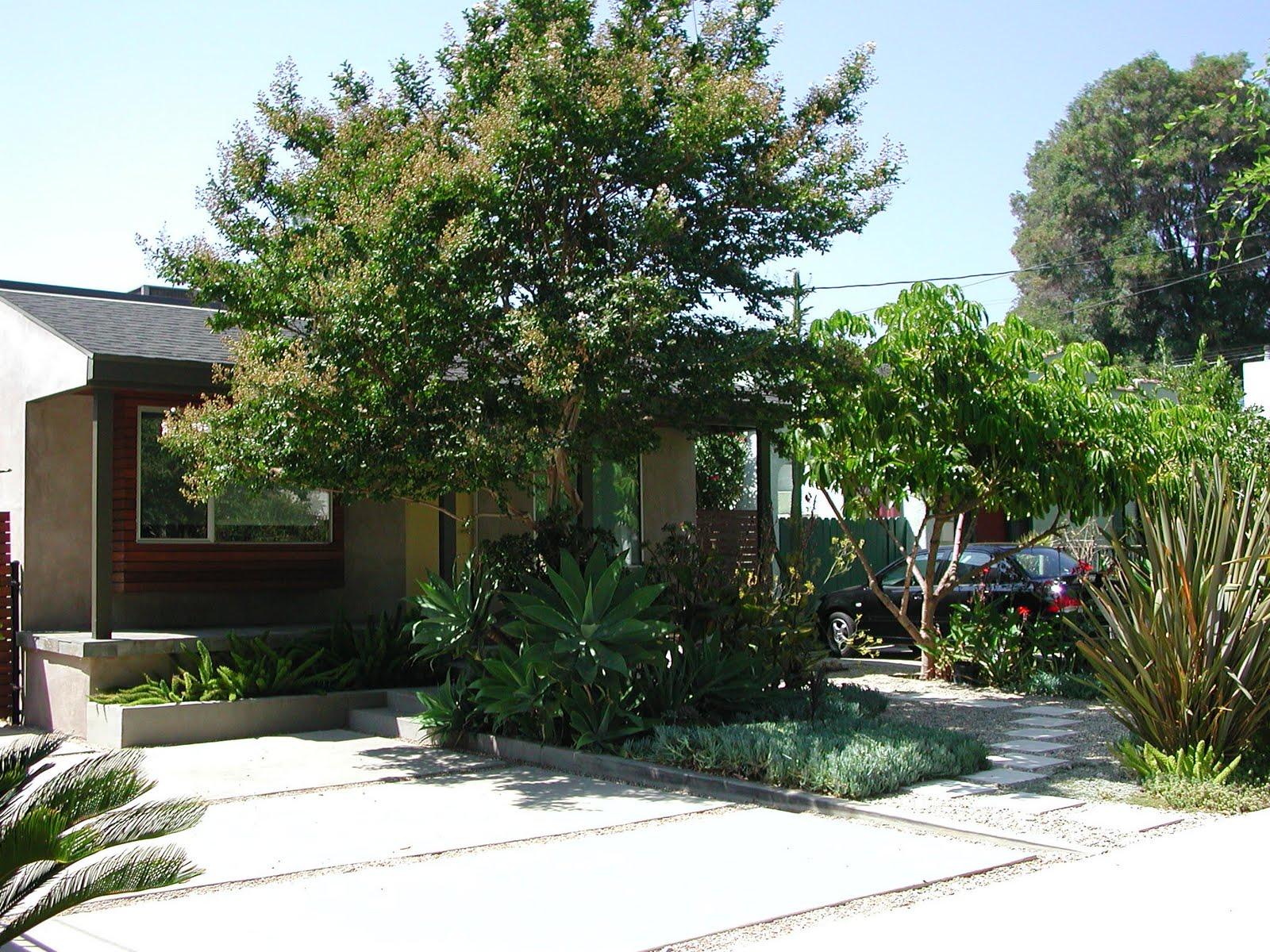 succulent front yard 28 images succulent front yard  : DSCN1705 from www.catworldusa.com size 1600 x 1200 jpeg 446kB