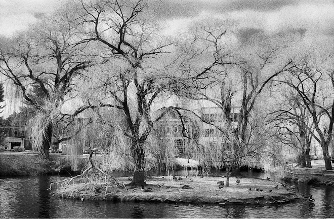 Duck Pond, Winchester, Mass. 1