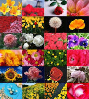 s1mis7 - Flowers