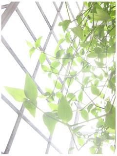 planta al sol