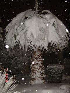 soo pretty live florida snow