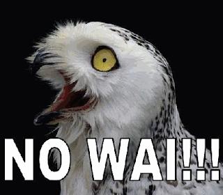 No wai!!! owl