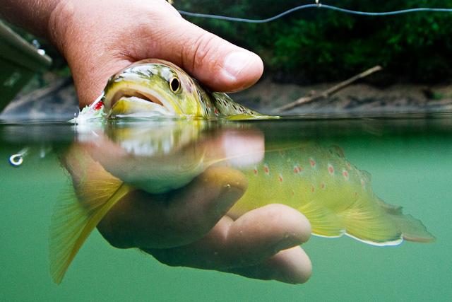 Mušičarenje Musicarenje-ribolov-bih-bosna-flige-fly-fishing-fischen-angeln