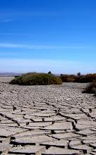 Ecosistema: Pampa del Tamarugal