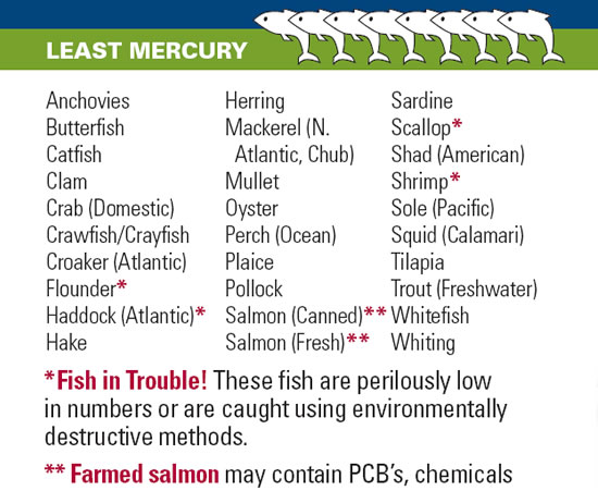 Fish and mercury for Low mercury fish pregnancy