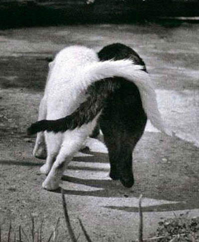 [luciane-empatia-gatos.jpg]