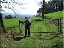 De nuevo caminando por verdes prados