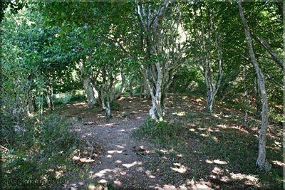 Se cruza el bosque