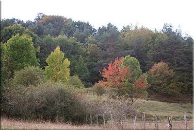En otoño los ocres matizan los bosques