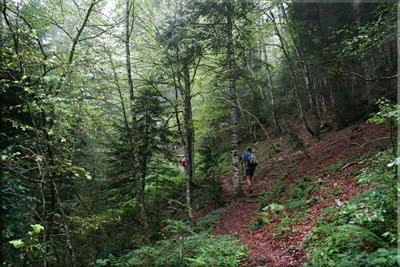 Ascenso por el bosque