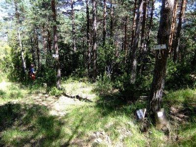 Marcados atajos por el pinar