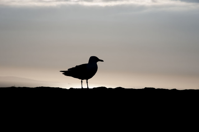 Travel, attractions, united kingdom, llandudno, Great Orme Marine Drive, bird silhouette