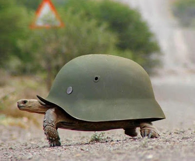 Bullet the turtle