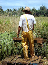 Woody washing Vetiver on the Farm