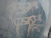 نقوشات صخرية باقليم طاطا