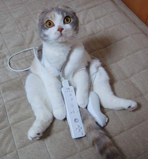 Cat and Wii by plynoi from flickr (CC-NC)