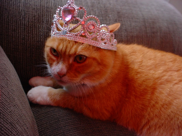 Fuzzy Queen of Couchland by Nibby Nebbulous from flickr (CC-BY)