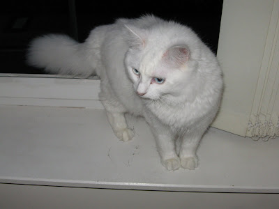Photo of my cat Cloud, for no particular reason (public domain)