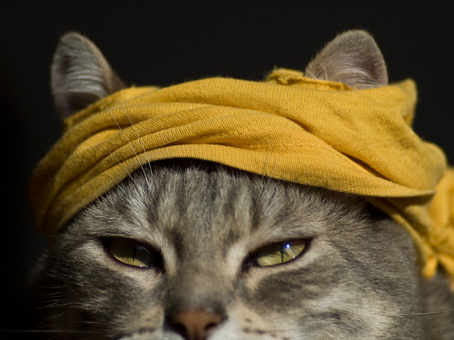 Rambo Cat by Gerard Girbes from flickr (CC-NC-ND)