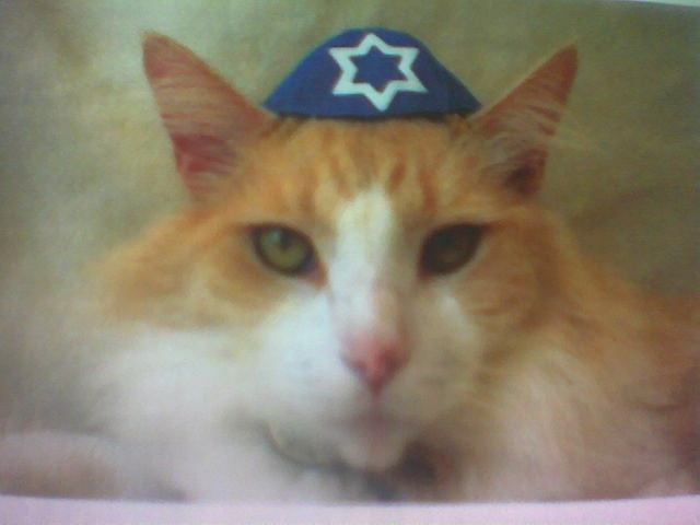 jewish cat by Shira Golding from flickr (CC-NC)