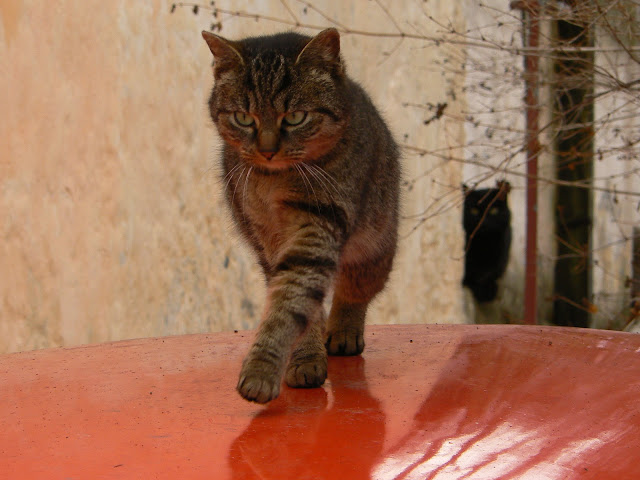 Kočka z Mincovní by abejorro34 from flickr (CC-NC)