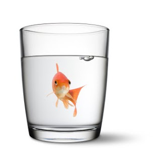 goldfish in glass