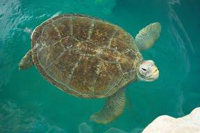 Clearwater Marine Aquarium Internship A Few Of Our