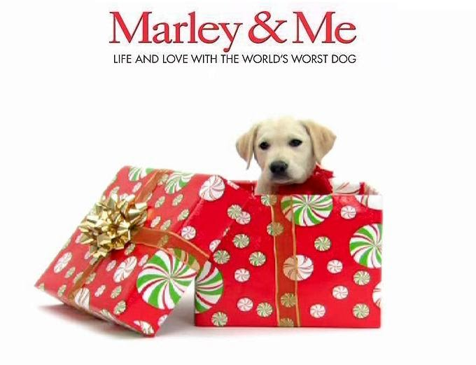 book report marley and me His first book, marley & me, is a number one inte previously he worked as a reporter, bureau chief, and columnist at newspaper in michigan and florida he is also the former editor on chief of rodale's organic gardening magazine.