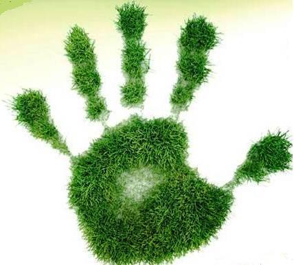 Oficinas ecologicas porque la ecolog a for Oficina medio ambiente