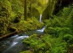 nostalgija miškui