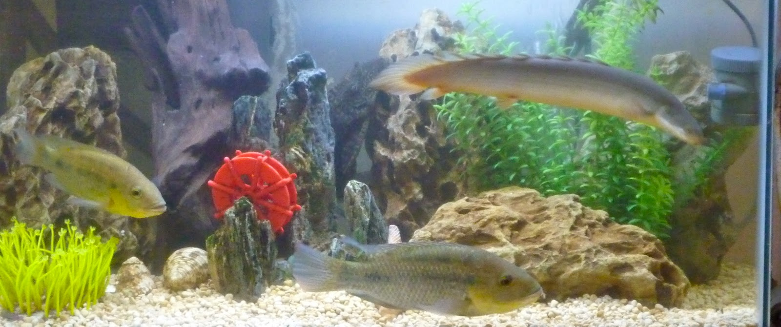 Fish aquarium in johor bahru - In This Tropical Tank You Can See Chiclids Lizard Fish Behind The Rocks Are Catfish Ghost Fish Etc