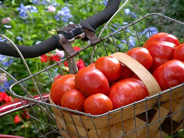 Tomatoes can save you from high cholesterol