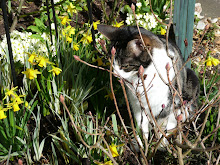 Nobby in the spring garden