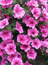 Petunias in September