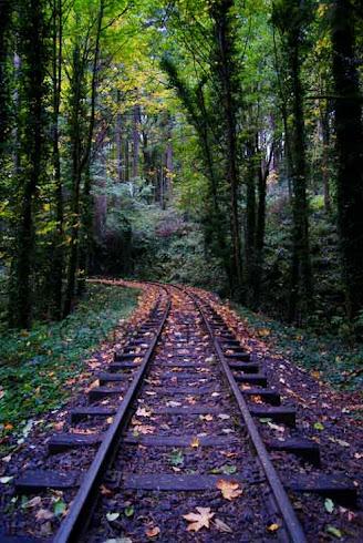 Park Tracks