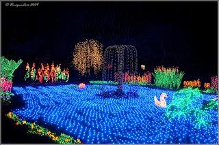 Just visiting puget sound wa bellevue botanical garden d 39 lights for Bellevue botanical garden lights