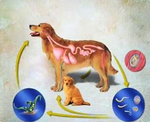 Aplicação de vidoeiro de alcatrão no interior de parasitas a crianças
