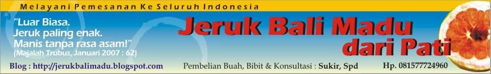 Jeruk Bali Madu Dari Kabupaten Pati