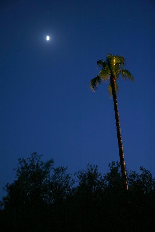 [s_palm-tree-moon.jpg]