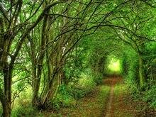 bosque infiito