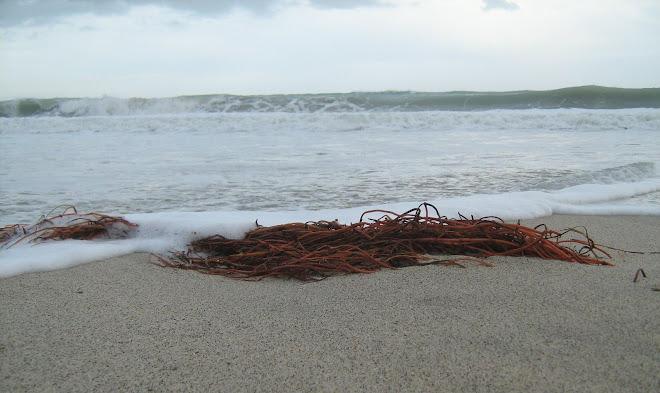 Spiaggia di S. Andrea Jonio - Panorama quattro - Foto di Massimo Ranieri