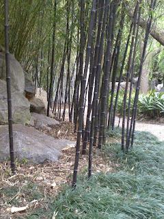 Ryan 39 s garden my australian adventure chinese garden of for Landscaping courses adelaide