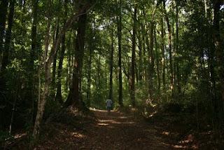 Kuringal trail.
