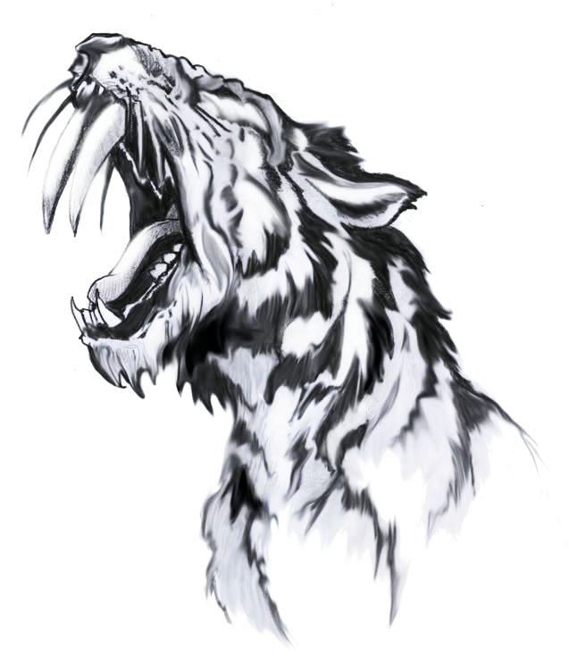 Sabertooth Tiger Drawings Http//wsutypef10 Xaniblogspotcom/